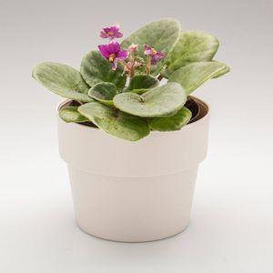 Vaso-Cultivar-P-125-x-125-x-10cm-Linha-Plantar-Ou-Ambientada